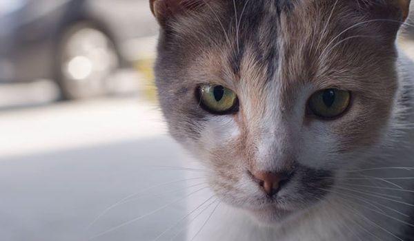 Going. | Kedi - Sekretne Życie Kotów - Forum