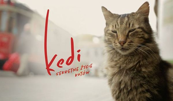 Going. | KEDI - sekretne życie kotów - Kino Muranów