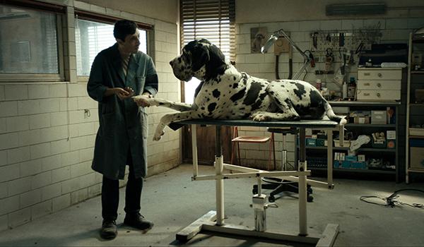Going.   Dogman - Kino Nowe Horyzonty